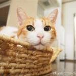 引っ越しても変わらず「メイズ製ペット用ベッド」であごのせをする猫