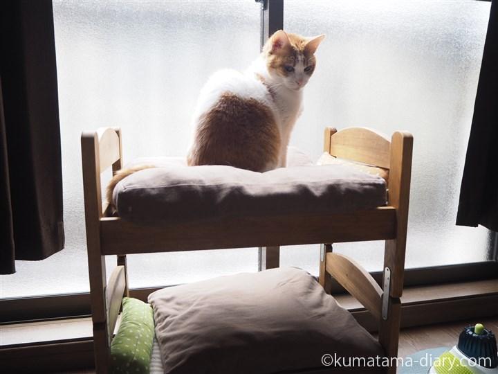 IKEA猫ベッドのたまき