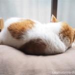 IKEAの「DUKTIG 人形用ベッド」で久しぶりに眠る猫