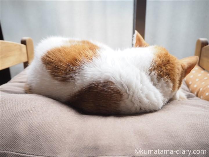 IKEA猫ベッドで寝るたまき後ろ姿