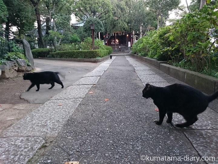 移動する黒猫さん