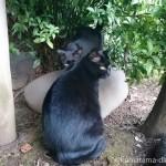 【文京区】白山神社の仲が良い黒猫さんたち