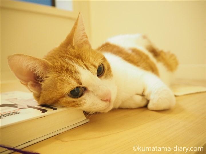 本を枕にするたまき