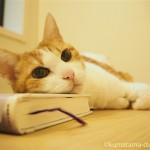 本を枕にして、お風呂のフタの上で寝る猫