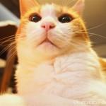 「YAMAZEN 遠赤外線カーボンヒーター」と湯たんぽをダブル使いする猫