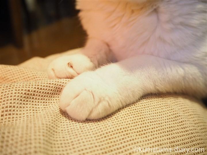 湯たんぽの上の前足