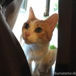 留守中の猫のお世話を「Tokyoペットシッター」にお願いしました
