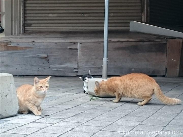 茶トラ猫さん親子