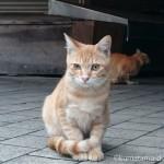【若松区】早朝の市場の猫さんたち