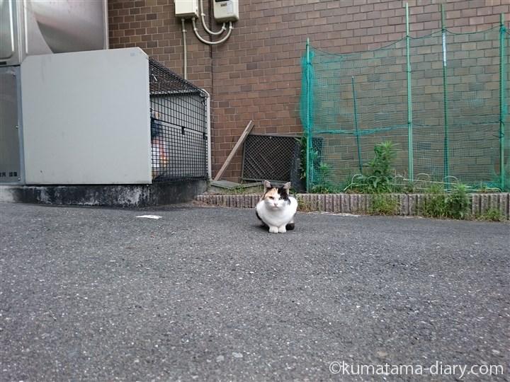 三毛猫さん発見