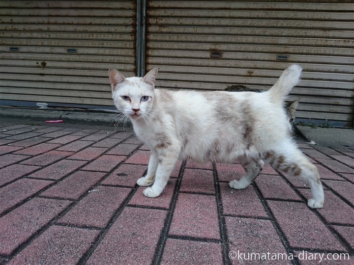 個性的な白猫さん
