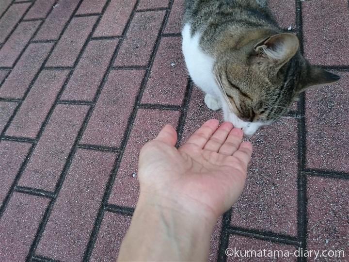 手をにおう猫さん