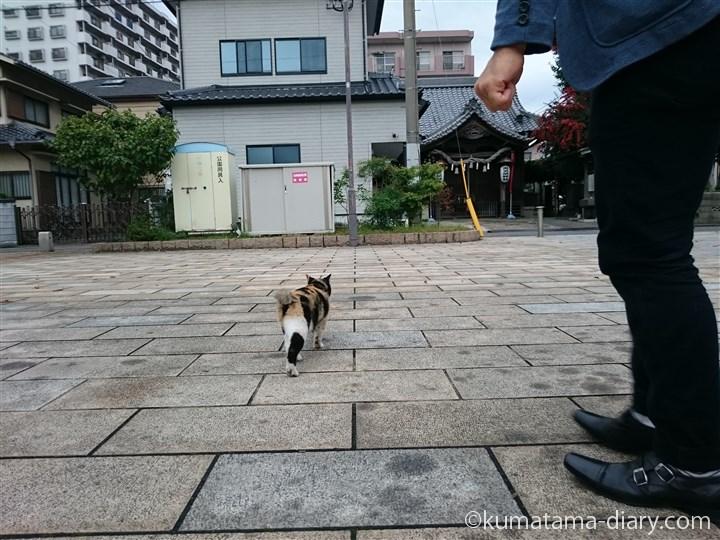 彼と三毛猫さん