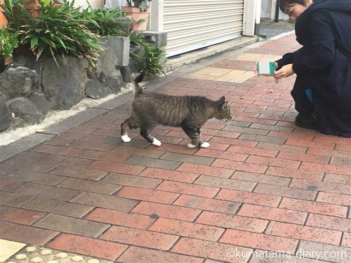 私とキジトラ白猫さん