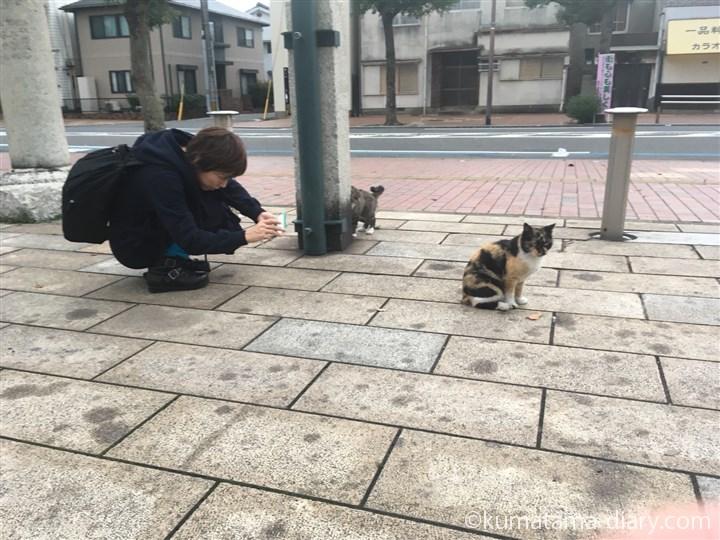 私と三毛猫さんとキジトラ白猫さん
