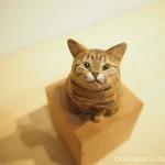 バンナイリョウジ個展「小さな木彫りのねこ3」を見に行きました