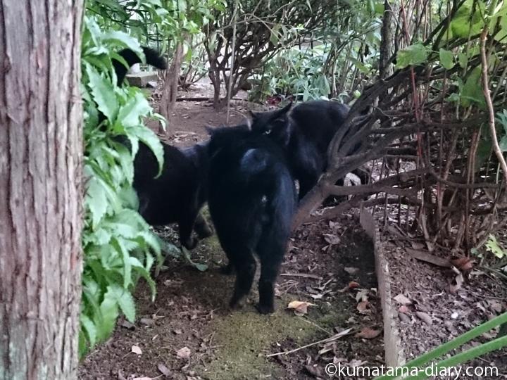 3匹の黒猫さん