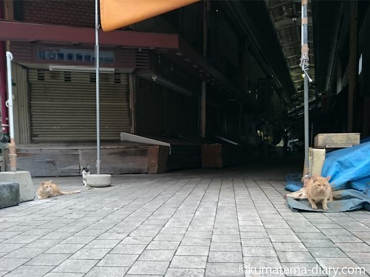市場の猫さん