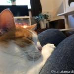 ペットシッターさんの膝に乗ってまったりする猫