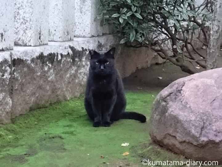 苔の上の黒猫さん