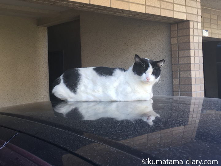 whiteblackcat