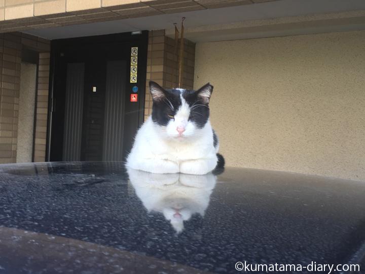 whiteblackcat1