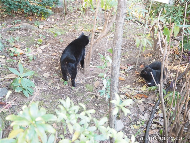 白山神社黒猫さん2匹