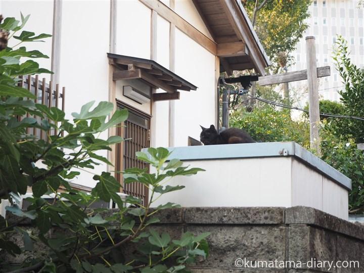 物置の上の黒猫さん