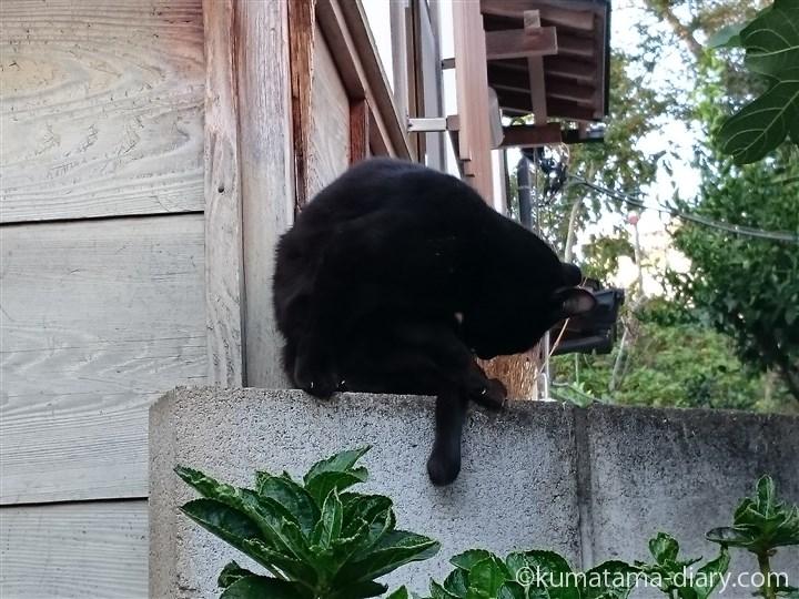 毛づくろいする黒猫さん