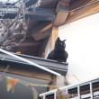屋根の上の黒猫さん