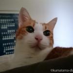 猫とベッドで一緒に眠るしあわせ