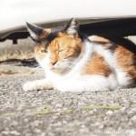 【文京区】駐車場でひなたぼっこする猫さんたち