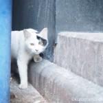 ほぼ日「生活のたのしみ展」と警戒心が強い六本木の白黒猫さん