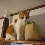 キャットウォークの最上段で猫草を食べる猫