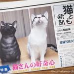 『月刊猫とも新聞』2017年12月号の特集は「猫さんの好奇心」です