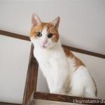 キャットウォークを上る猫