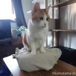 陶器の湯たんぽにすかさず乗る猫