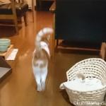 エサが待ちきれず、ぐるぐると歩き回る猫【動画】
