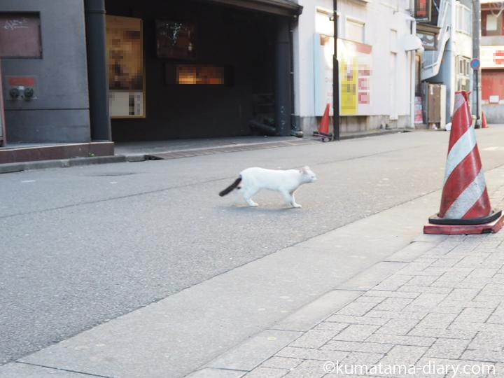 六本木の白黒猫さん