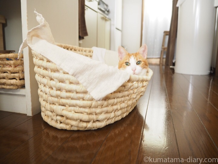 メイズ製ペット用ベッド