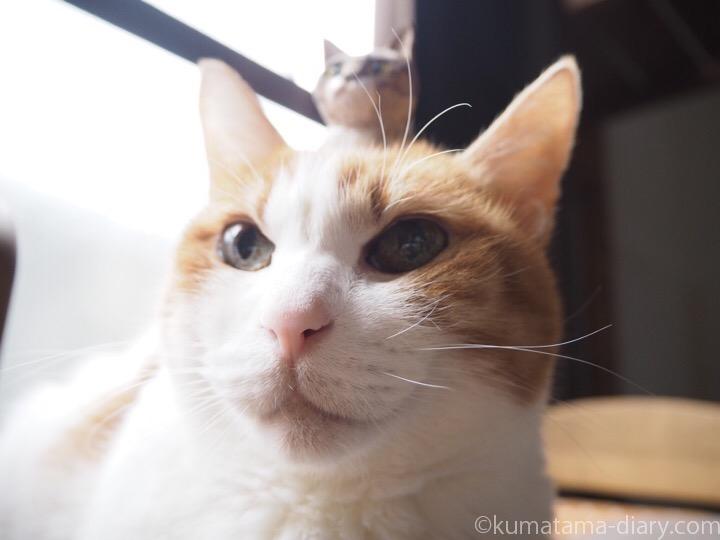 頭に木彫り猫を乗せたたまき
