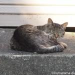 【文京区】路地の奥のキジトラ猫さん