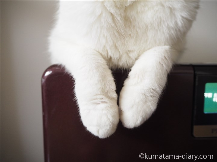もふもふの足