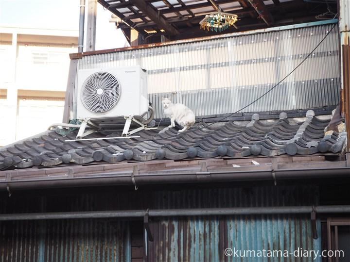 屋根の上の猫さん