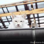 【若松区】屋根の上の猫さん
