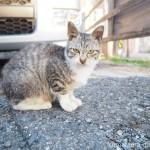 【若松区】物怖じしないキジトラ白猫さん