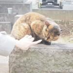 谷中墓地のキジトラ猫さんとサビ猫さん