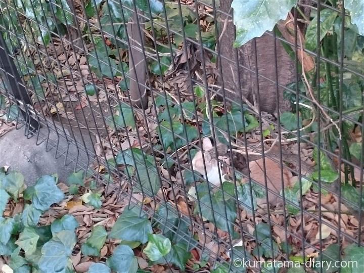 神谷町の猫さん