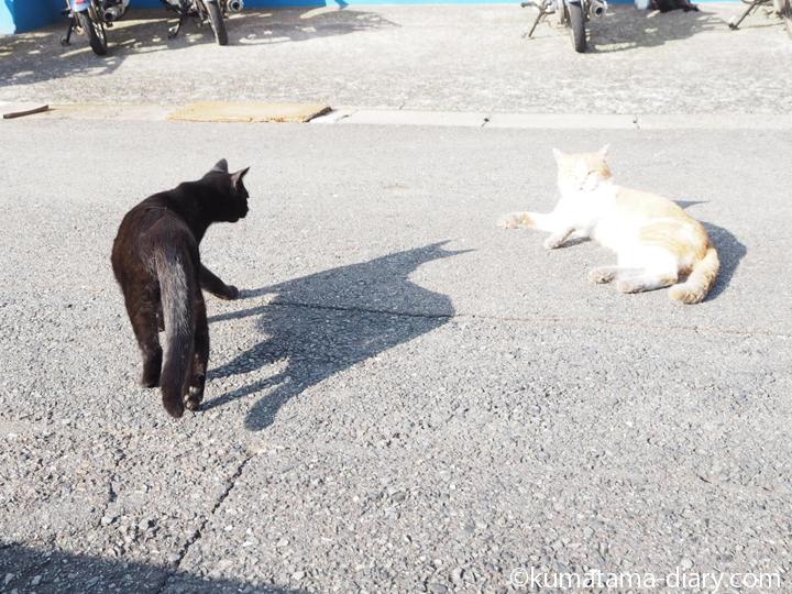 黒猫さんと茶トラ白猫さん