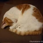 猫とのんびり過ごす大晦日